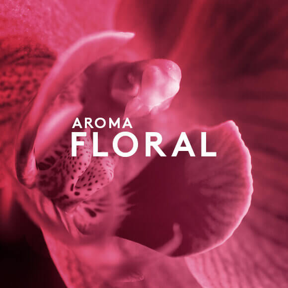 Aroma Floral